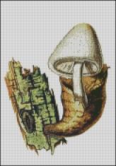 Kukmák bělovlný